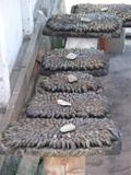 chez-mamelou-eglades-moules.jpg
